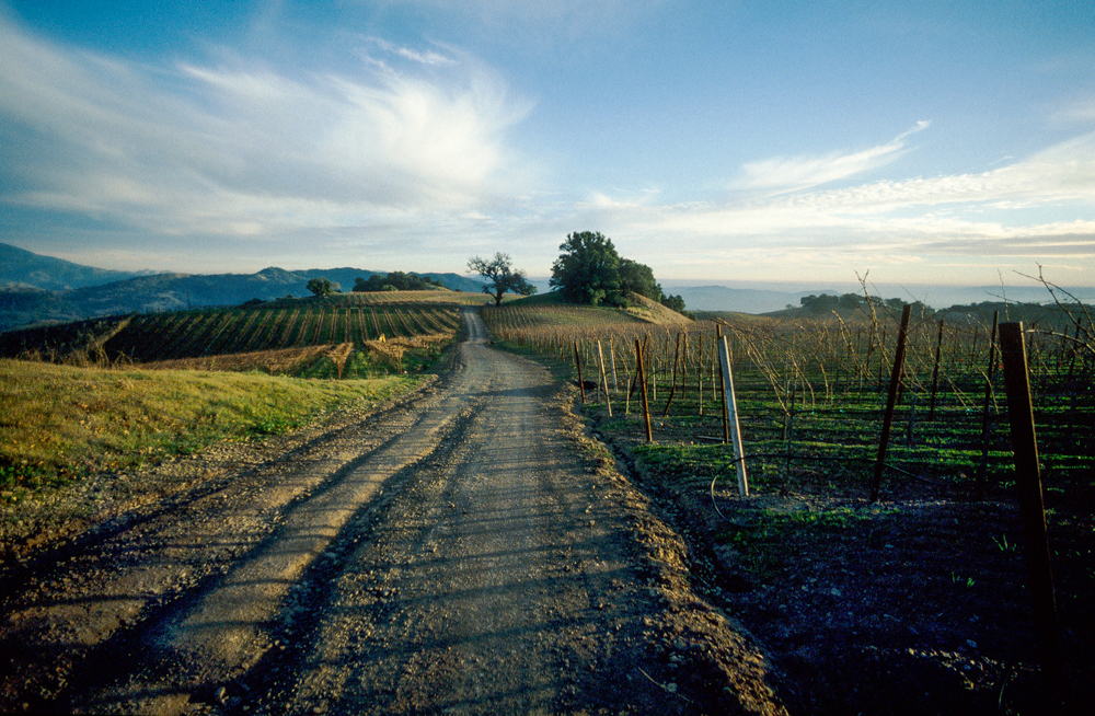 USA, Kalifornien, Sonoma, Alexander Valley (1999)