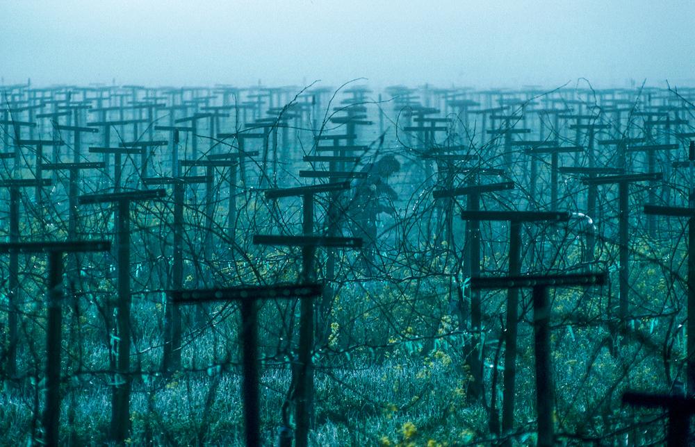 USA, Kalifornien, Sonoma, Nebel im Frühjahr (1994)
