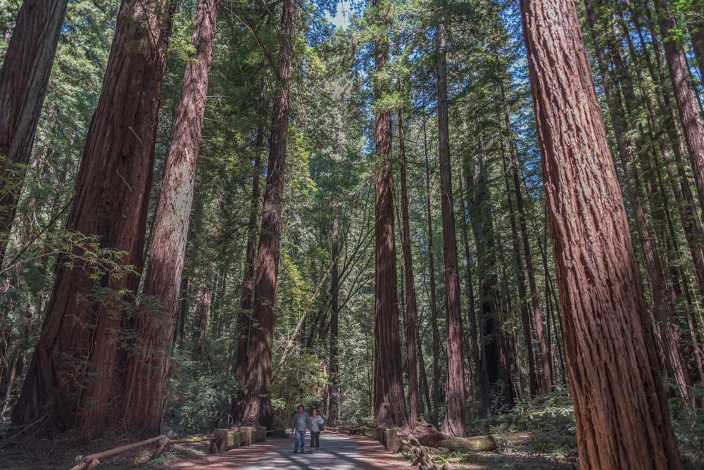 USA, Kalifornien, Armstrong Redwoods State Reserve (2016)