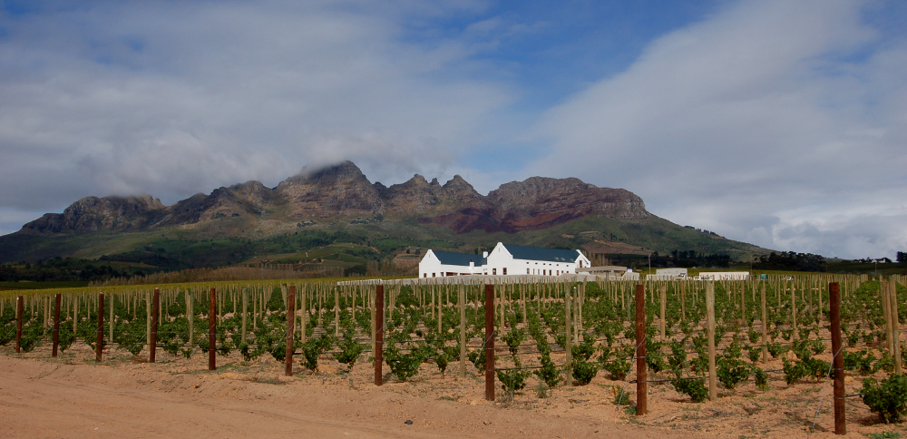 Südafrika, Stellenbosch, Helderberg Mountains, Alto Estate (2006)