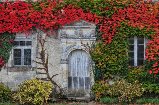 Frankreich, Gironde, Sauternes Château d'Armajan des Ormes, Herbstlaub (2011)