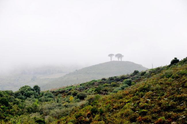 Südafrika, Stellenbosch-Jonkershoek Valley, Stark-Condé Winery (2012)
