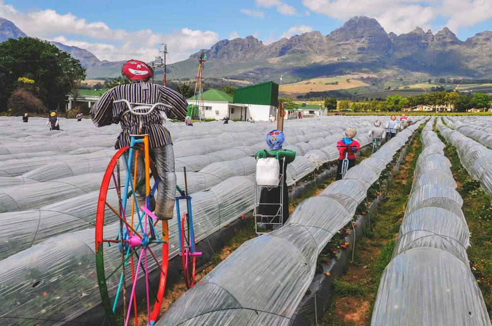 Südafrika, Stellenbosch, Erdbeerplantage Mooiberge mit Pappmaché-Puppen (2012)