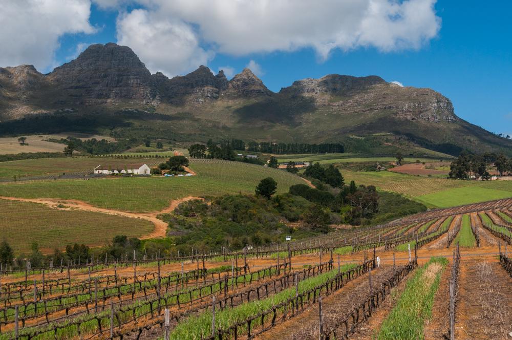 Südafrika, Stellenbosch, Weingut Ernie Els, Rebflächen und Stellenbosch Mountains (2008)