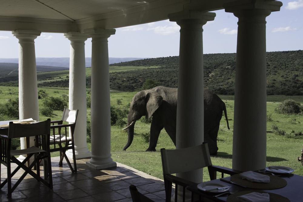 Südafrika, Eastern Cape, Addo Elephant Park, Gorah Elephant Camp und Afrikanischer Elefant (2014)