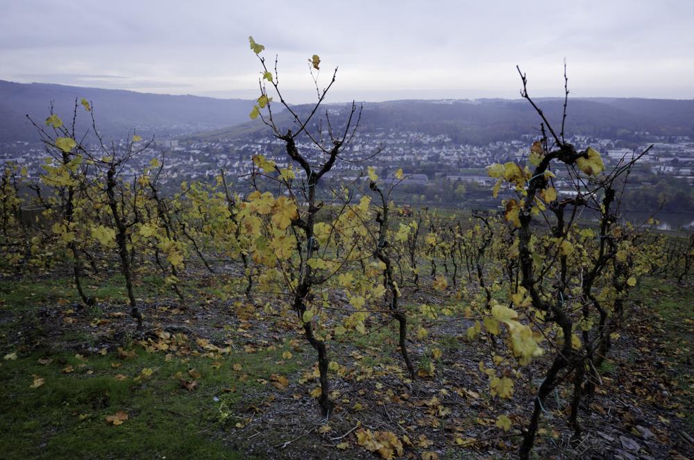 Deutschland, Rheinland-Pfalz, Mosel, Zur Rodung vorbereiteter Weinberg zwischen Bernkastel und Graach (2014)