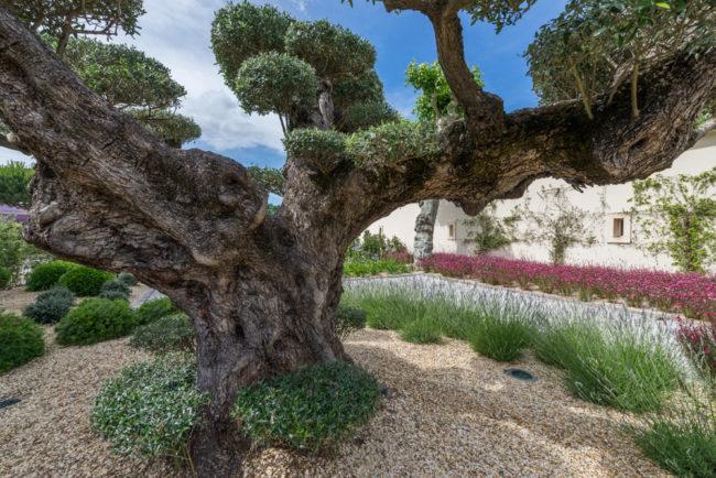 Frankreich, Gironde, Pesssac-Léognan Château Pape Clément, Garten/Park (2016)