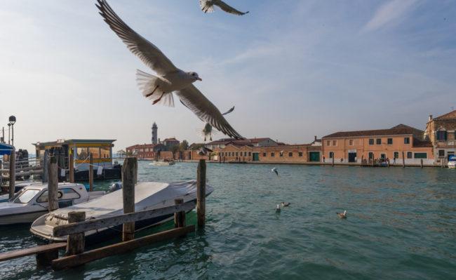 Venedig, Italien, Vaporettostation Murano Navagero, Möwen