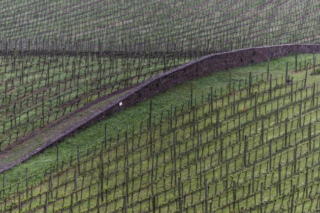 Brasilien, Rio Grande do Sul, Vale dos Vinhedos - Weinberge von Miolo, Lote 43 (2013)