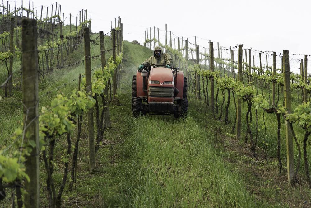 Brasilien, Rio Grande do Sul, Vale dos Vinhedos - Weinberge des Weinguts Pizzato und Umgebung, Reben spritzen (2013)