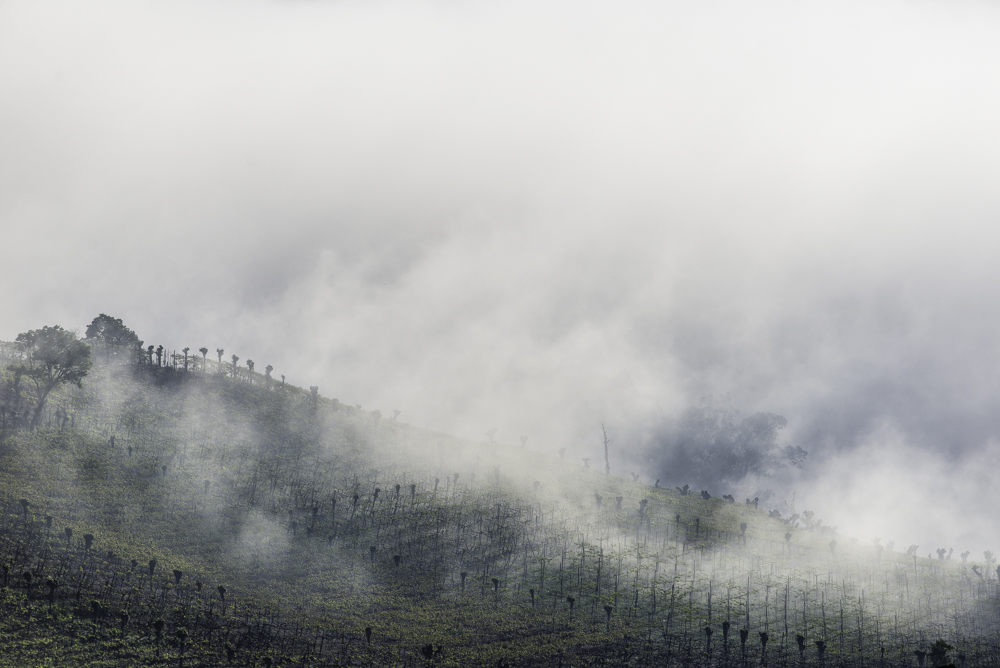 Brasilien, Rio Grande do Sul, Vale dos Vinhedos - Weinberge im Nebel (2013)