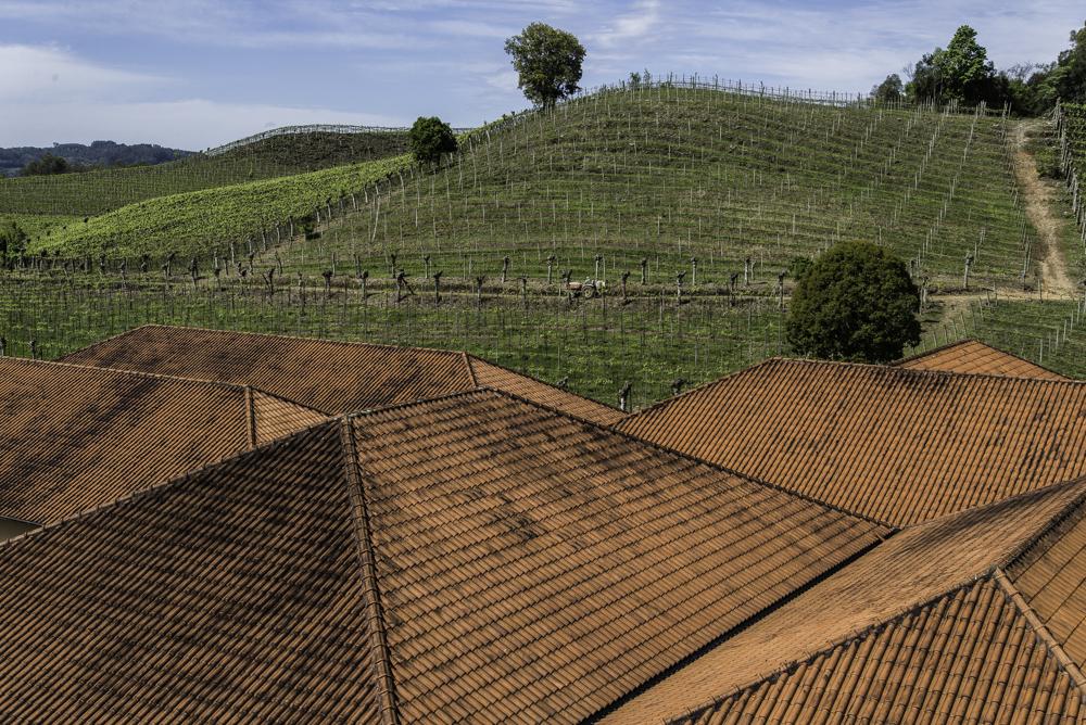 Brasilien, Rio Grande do Sul, Vale dos Vinhedos - Miolo, Gebäude und Weinberge (2013)