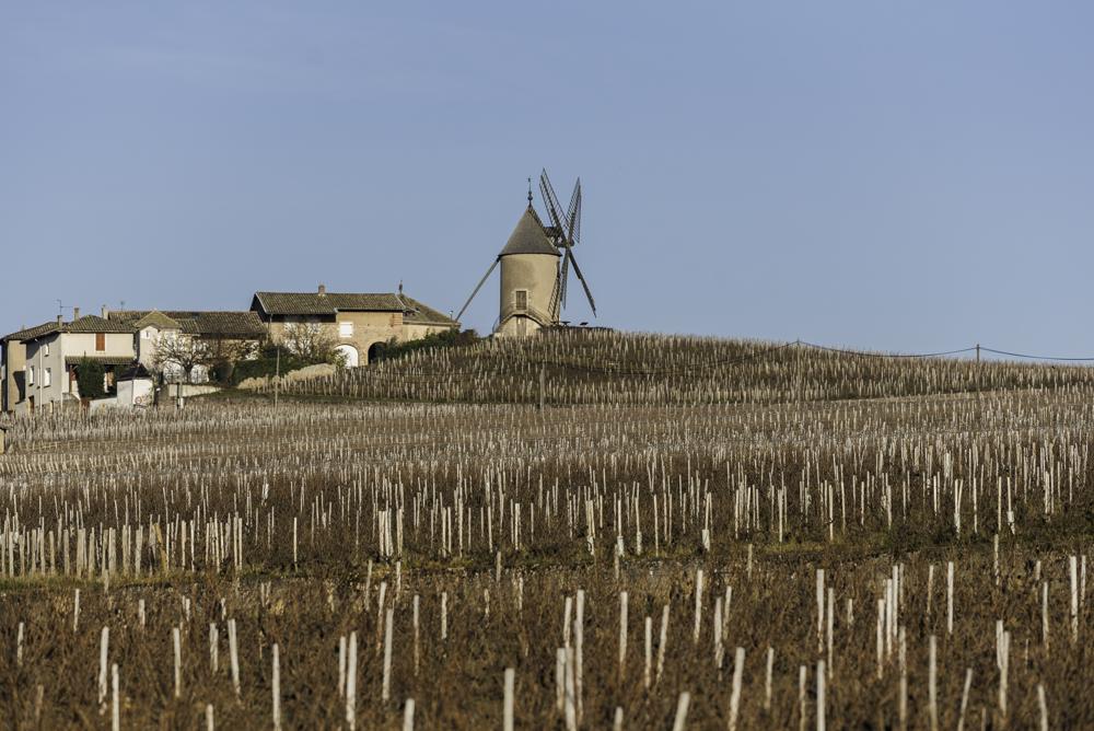 Beaujolais, Frankrich, Moulin-à-Vent, Le Moulin