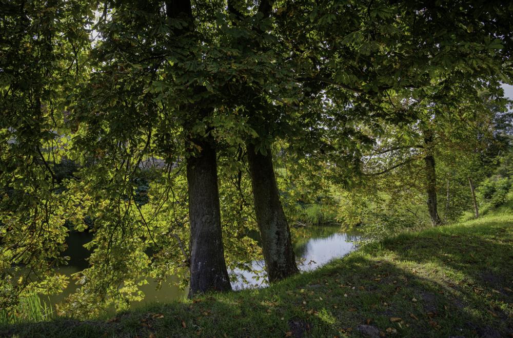 Burg Stargard, Burggraben und Wald