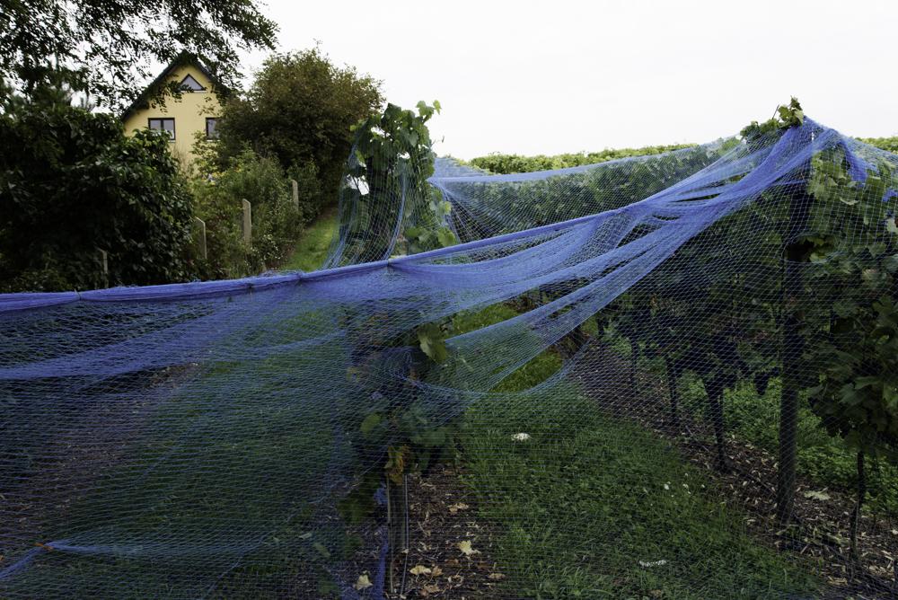 Werder (Havel), Weingut Dr. Manfred Lindicke, Netze gegen Vogelfraß