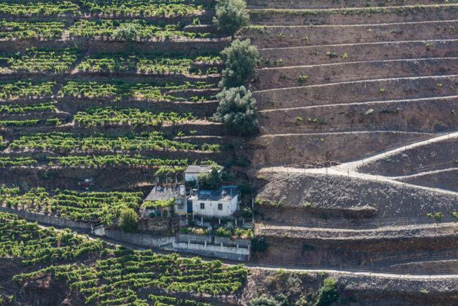 Portugal - Douro - Weinberge bei Quinta Dona Maria (2017)